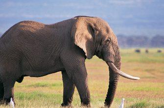 Почему мы иногда чувствуем себя слонами